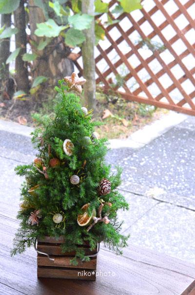 クリスマスツリー フレッシュ レッスン