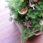フレッシュ クリスマスツリー レッスン