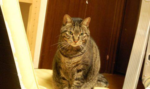 老猫 介護 ペットロス