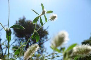 ペットロス 花