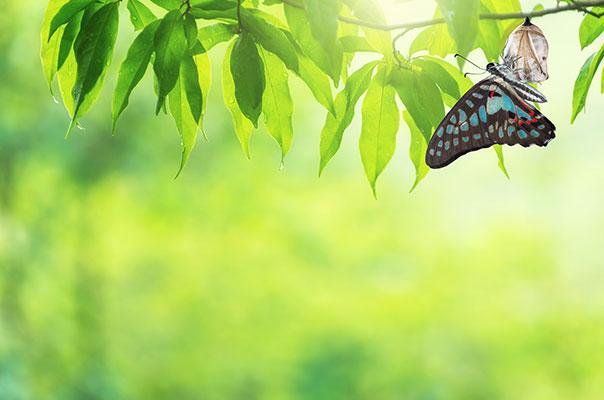 さなぎから蝶へ